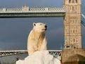polar bear scam