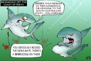 zeg shark big