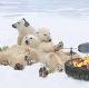polar bear BBQ