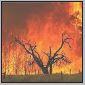 bushfire3