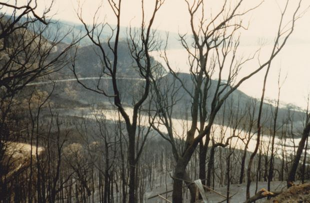 lorne post-fire