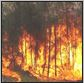 bushfire4