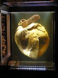 phar lap's heart