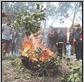 indigenous smoko