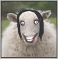 jacinda sheep