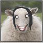 jacinda sheep