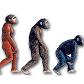 evolution II