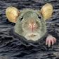 drowning rat II